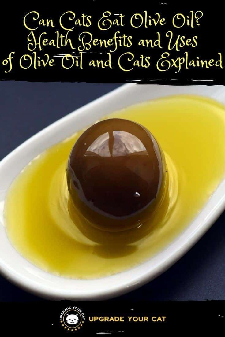 Can I Give My Cat Olive Oil For Constipation