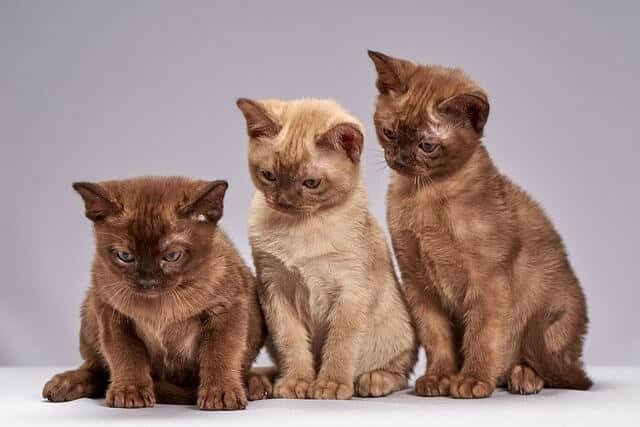 pet cat videos