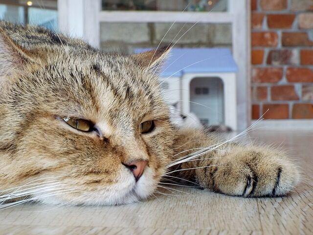 Cat Make Gurgling Sounds