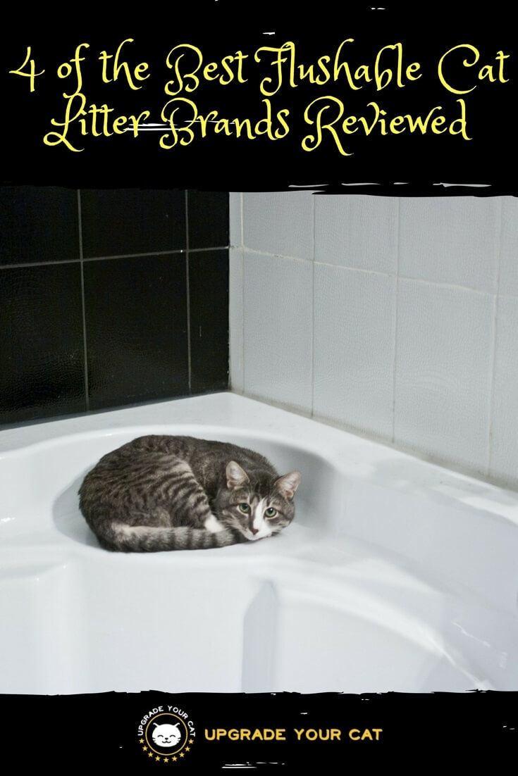 custom cat gifts