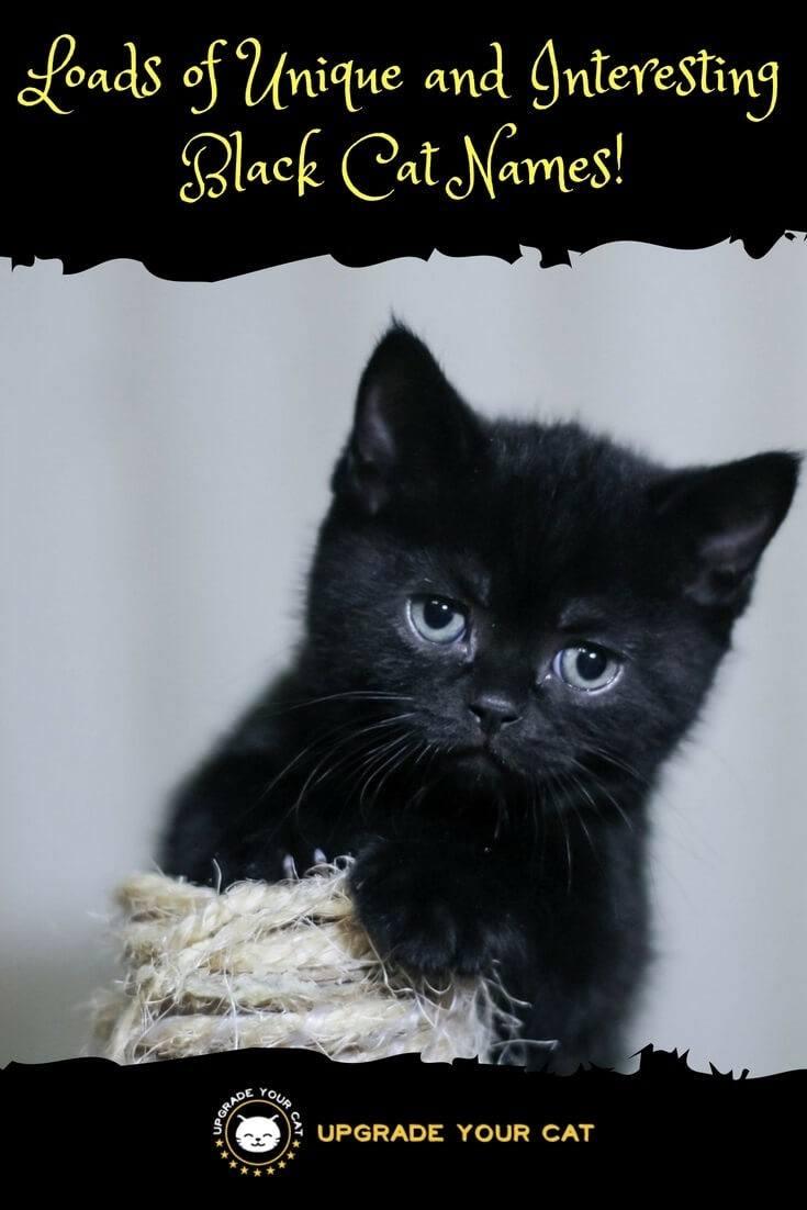 Cool Black Cat Names - Cute Cat 2017