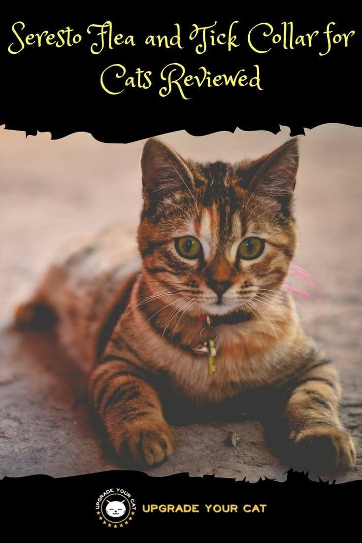 are male cats spayed or neutered